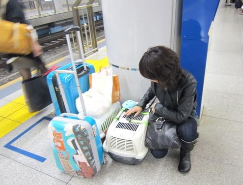 日帰りの東京行きのこの荷物!