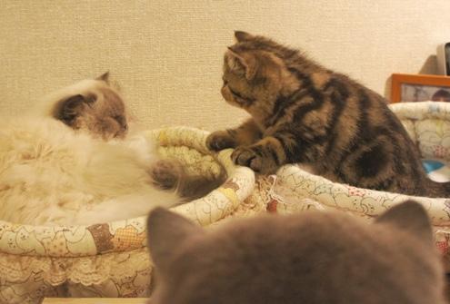 11)ヤム&うずら