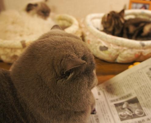 12)新聞読んでるフリしてるですよ