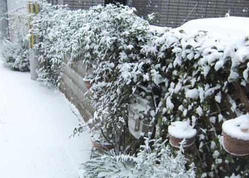 10)大晦日から雪