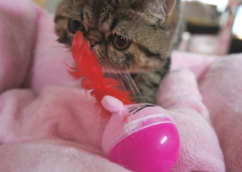 9)ゆんこさんのおもちゃ