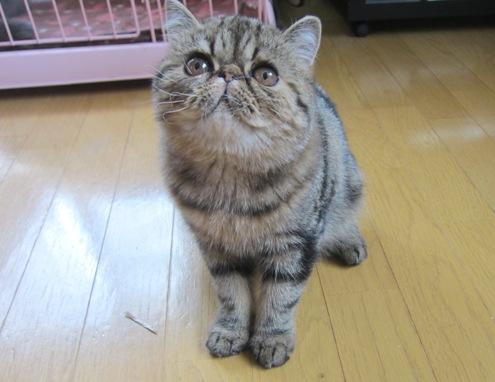3)ぷーねーたん怒ってるでぷよ