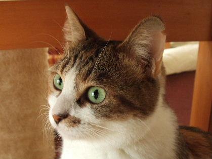 DSCF0872あかね緑の瞳a