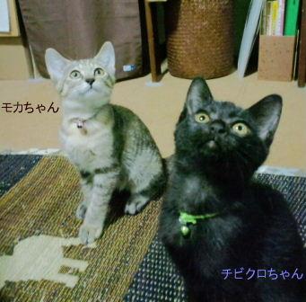 モカちびくろCA3C22170002_20100928191522
