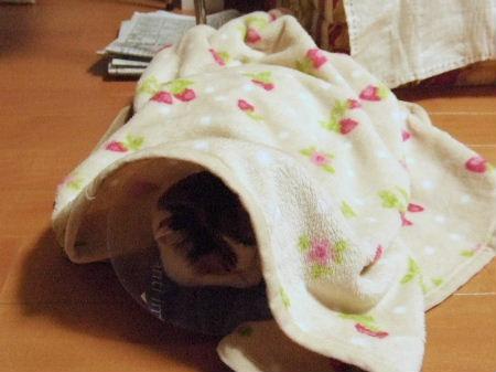 DSCF7006めぐいちご毛布