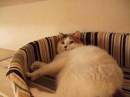 めぐ猫ベッド3