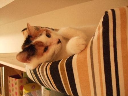 めぐ猫ベッド1