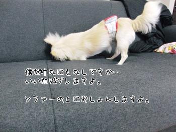 3_20100711175034.jpg