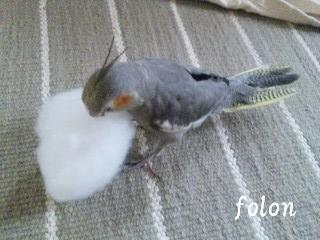 綿と絡むデコ