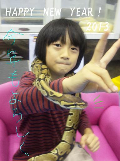 ニシキヘビ~年賀状