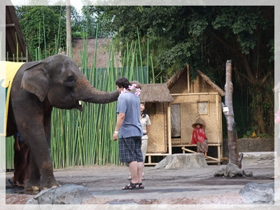 ゾウのショー2