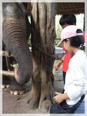ゾウさん3