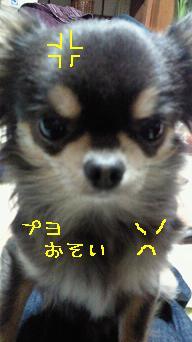 NEC_0803=1