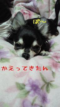 NEC_0802=1