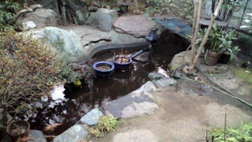 池 2012-01-19 (9)