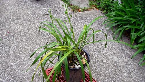 謎の植物 2012-05-24