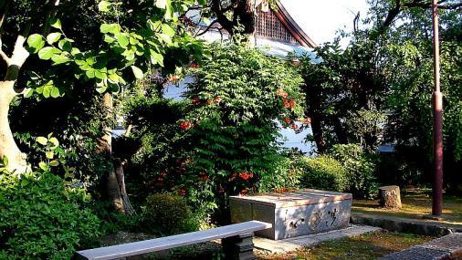 凌霄花 2012-07-10