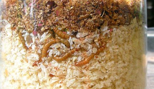 ミルワームの床材 2012-07-25 (7)