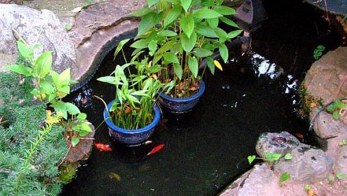池 2012-08-04 (2)