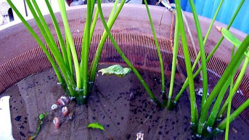 蝶の蛹 2012-08-09
