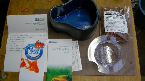 水作メダカ鉢 (15)