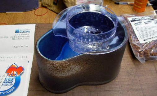 水作メダカ鉢 (24)