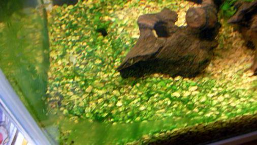 藍藻2012-09-29 (1)