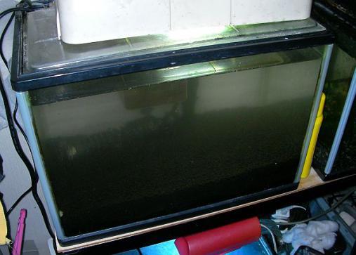2012-12-05 ルリーシュリンプ水槽