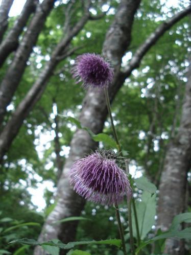 紫花.JPG★