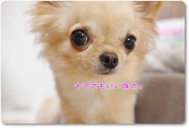 004_20100618193159.jpg