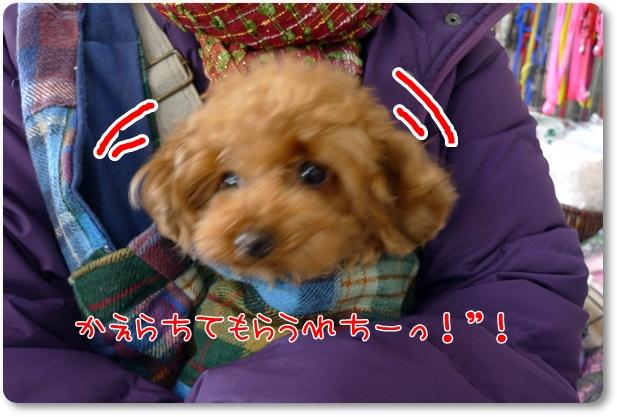 004_20110105161102.jpg