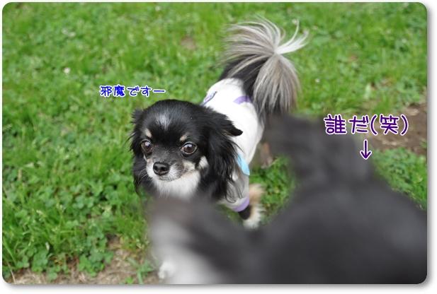 005_20100530192056.jpg