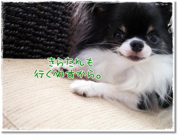 010_20120821203238.jpg