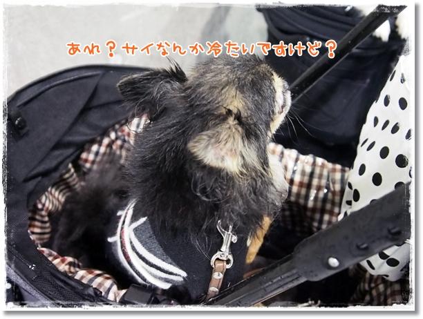 011_20121225214604.jpg