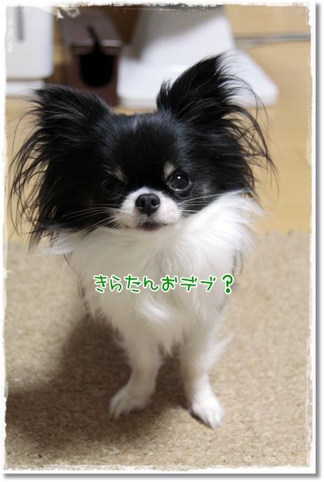 015_20120210180716.jpg