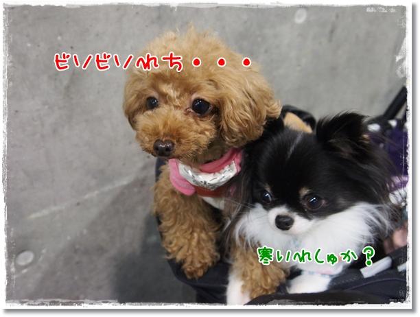 019_20121225214607.jpg