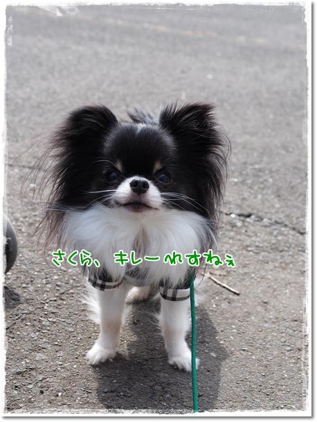 030_20130323210459.jpg