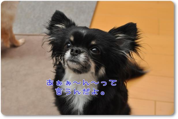033_20100416210625.jpg