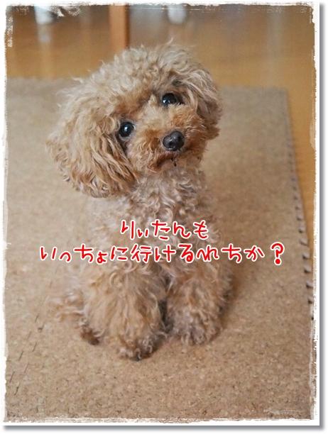 039_20120821203238.jpg