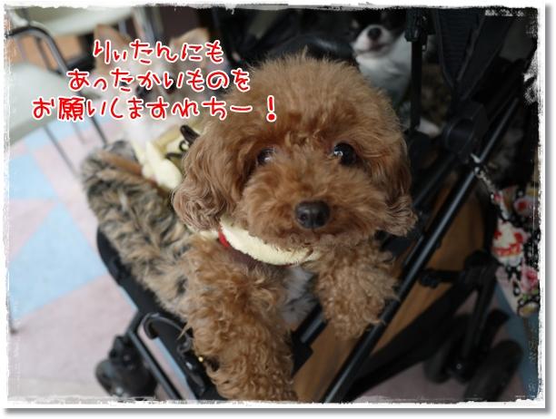 040_20120203192141.jpg