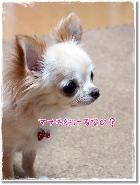 042_20120821203238.jpg