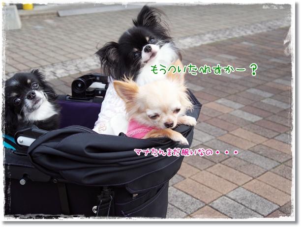 061_20121008191240.jpg