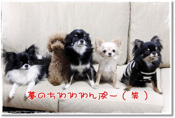 124_20120917111126.jpg