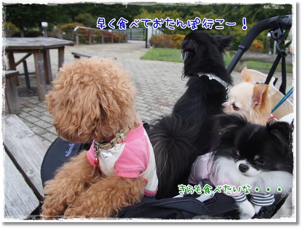 137_20121013181321.jpg