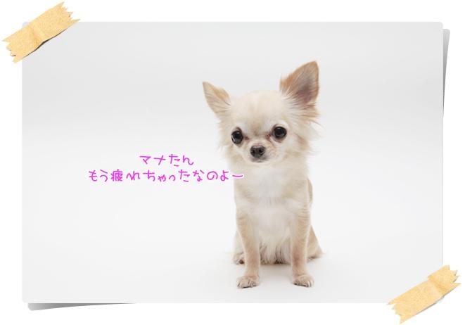 272_20111213210743.jpg