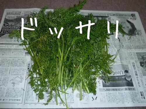 にんじんの葉っぱ2