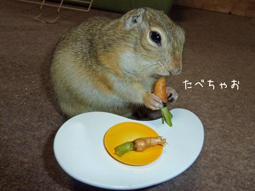 テーブルで食べるジリス