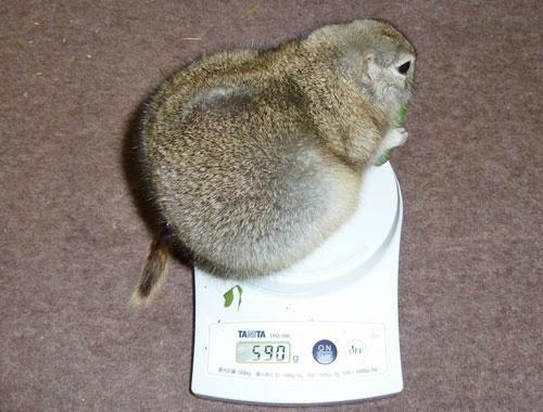 2010年10月27日の体重