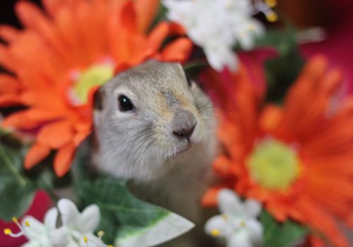 お花とぴいちゃん2