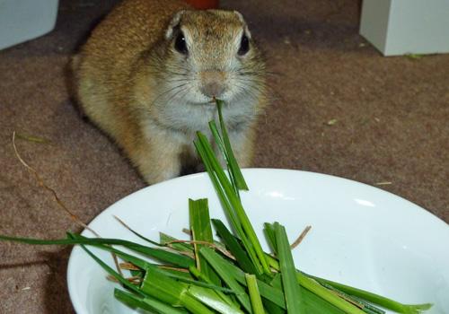 生牧草を食べるきゅうちゃん